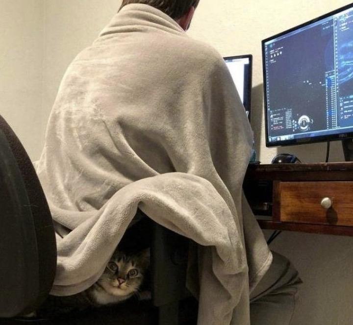 Ce chat ne quitte jamais son maître