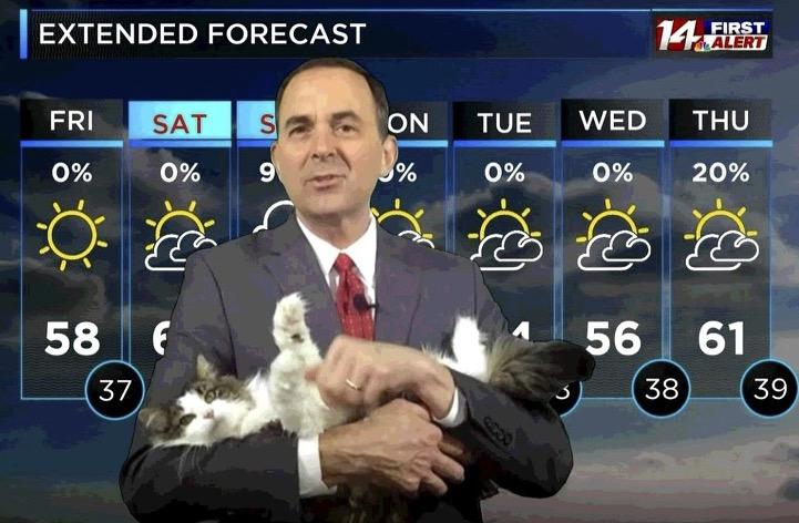 Ce chat ne lâche pas son maître, présentateur météo