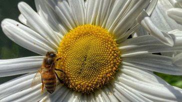 Les conséquences de la 5G sur les insectes