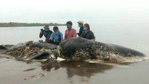 Photo choc : une déchèterie hallucinante trouvée dans le corps d'un cachalot géant : 100 verres en plastiques, 25 sacs et bien d'autres ! Les écologistes sont furieux !