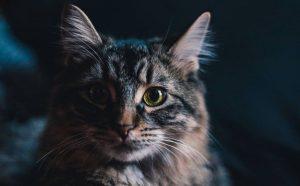 8 choses qui déplait fortement à votre chat, mais que vous faites sûrement sans le savoir !