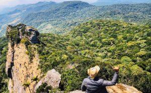 La forêt tropicale disparaît : 10 millions d'hectares disparaissent par an et c'est catastrophique