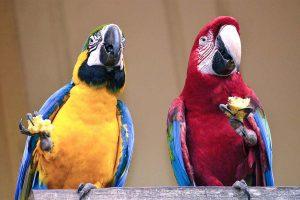 Ces perroquets ont été exclus du zoo parce qu'ils insultent le public : les visiteurs sont choqués et outrés par leur comportement inacceptable !