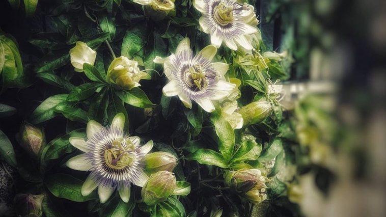 Plantes pour dormir