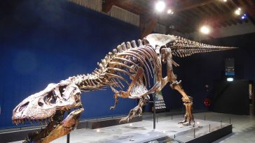 Dinosaure Trix