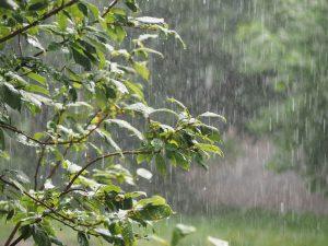 Découvrez comment la pluie peut réduire votre stress quotidien et vous booster, vous allez adorer le mauvais temps !