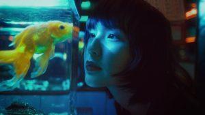 Comment garder l'eau de l'aquarium d'un poisson combattant chaude : qu'est-ce qu'un poisson combattant ?